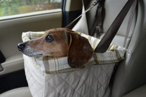 Car Seat For Small Dogs Safety First Wag And Cluck