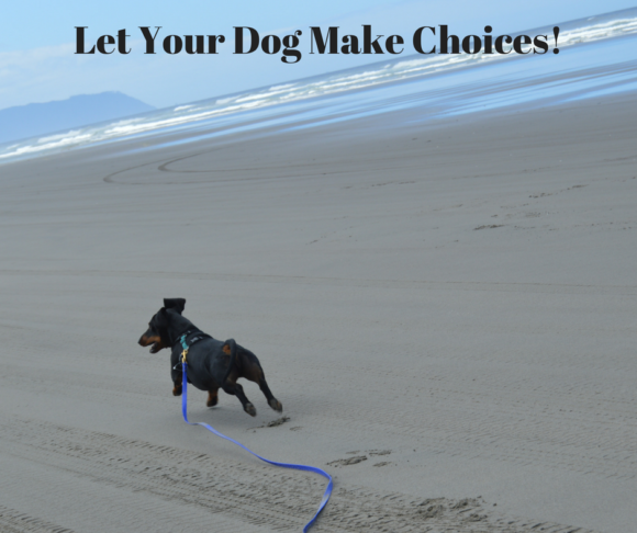 Letting Your Dog Make Choices