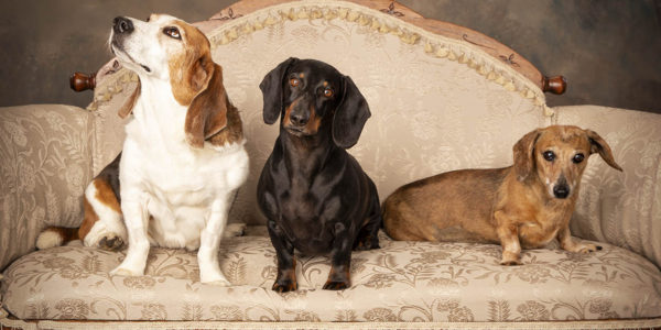 regal_dogs_on_couch
