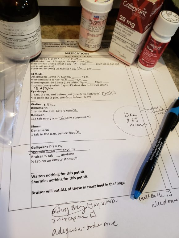 Senior Dogs: Why a Medication Chart is Important